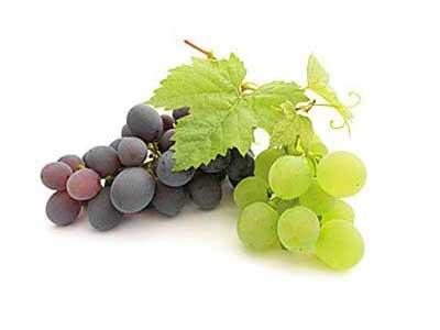 Целебный виноград, польза и вред для организма человека.