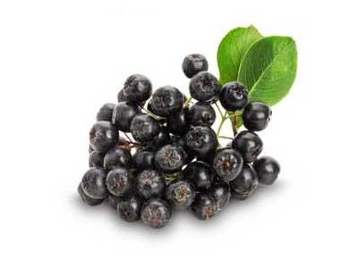 Целебная черноплодная рябина, полезные свойства и противопоказания.