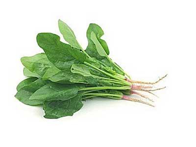 Целебный шпинат, польза и вред для здоровья человека.